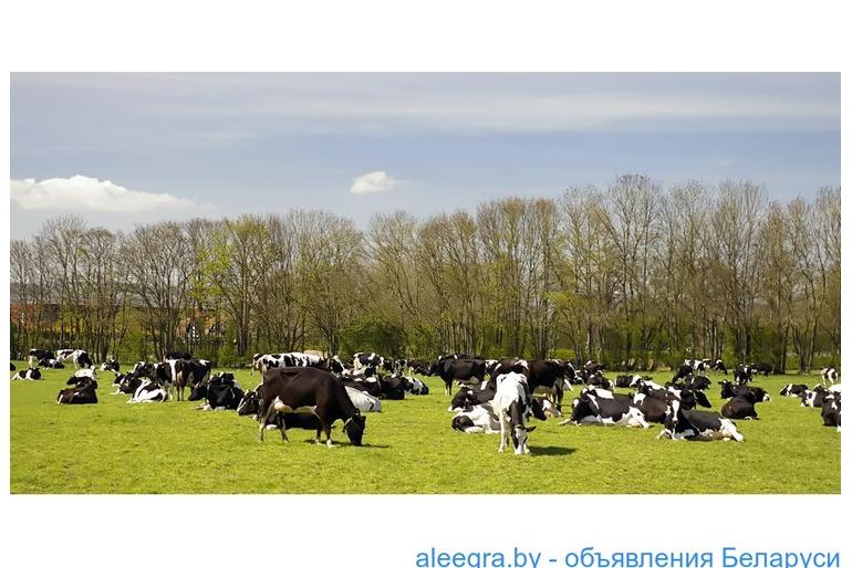 Фирма, имеющая большую сеть крестьянских хозяйств по Латвии