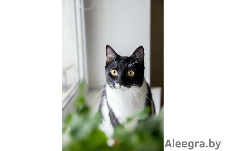 Машка - молодая кошка в дар