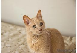 Рената - кошка для души