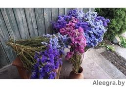 Сухоцветы Статица для букетов и композиций.