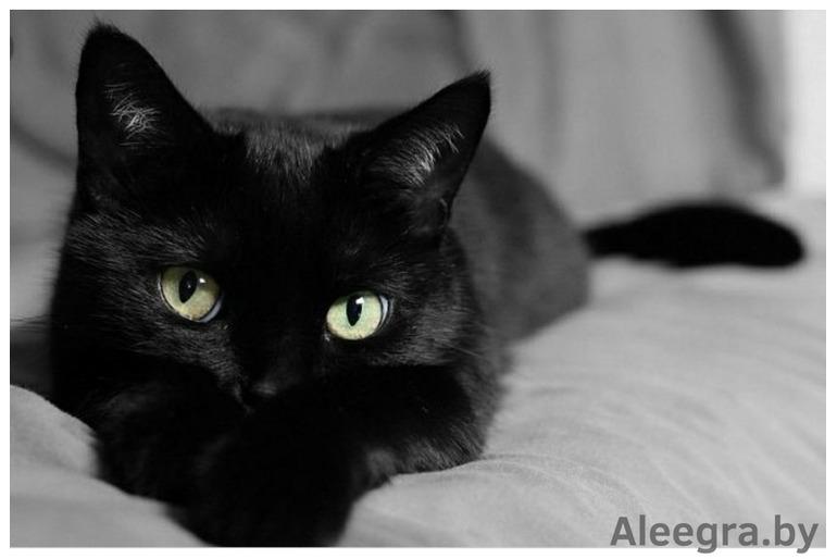 Роскошный шоколадный котенок