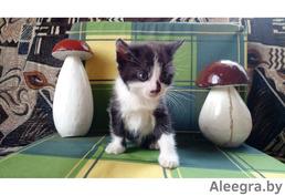 Отдам котят 3мальчика ,возраст 5недель