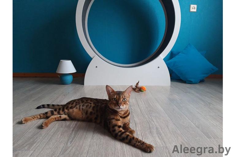 Беговое колесо для кошки