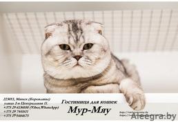 Предоставление услуг по содержанию и уходу за кошками
